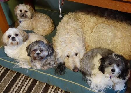 dogs-five (2).jpg
